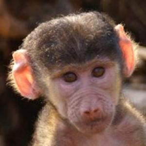 British mum calls cops after sexual assault by monkeys