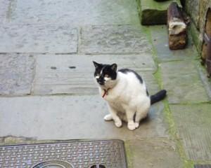 Cat survives 70mph motorway jaunt on van's roof