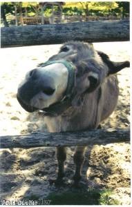 Donkey walks into Hampshire Tesco store