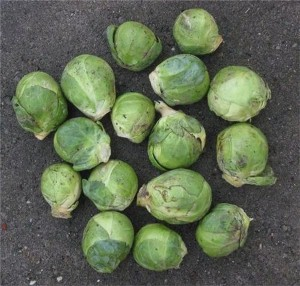 Man sees business idea in uneaten sprouts