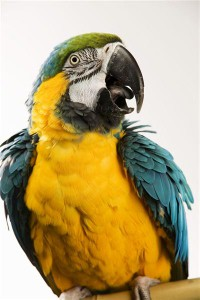 Police arrest parrot for swearing at woman