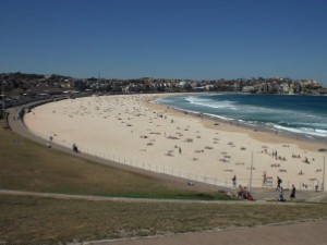 Surfer knocked out by whale off Bondi beach