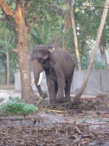 Woman forced to deal with the elephant in the room