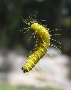 Thousands of caterpillars 'discovered by Gatwick chiefs'