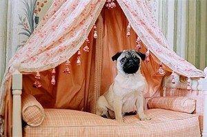 Doggy hotel to open in New York
