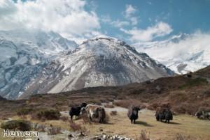 Man base jumps 6,000 ft from Himalayas