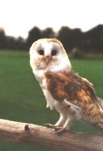 Owl turns head upside down