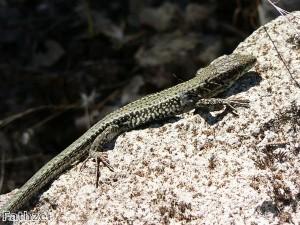 UK schoolboy finds lizard in his loaf