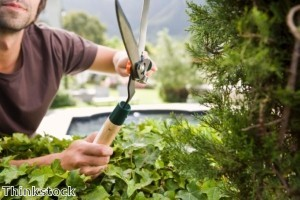 Warwickshire man's middle finger hedge attracts complaint