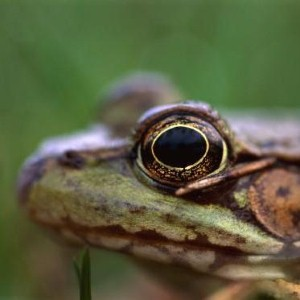Woman finds live frog in her salad bag
